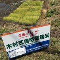 自然栽培のお田植えの式参加レポート